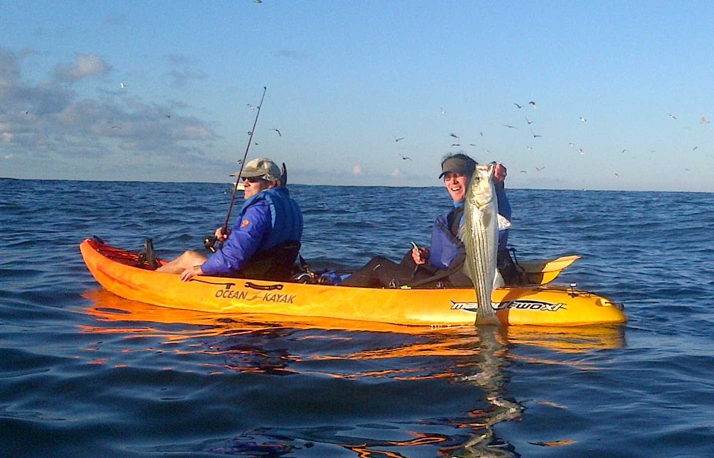Fall migration striper fishing main beach surf and sport for Long island surf fishing report
